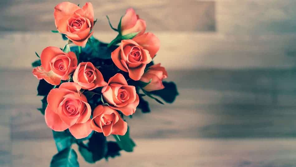 Idée décoration intérieure - La rose éternelle