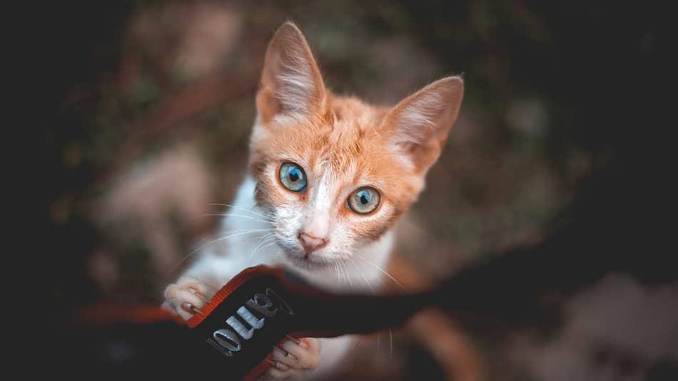 5 objets connectés pour chat