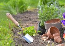 Quelles plantes et fleurs choisir pour un beau jardin ?