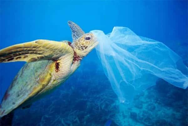 Tortue et déchet plastique dans l'océan